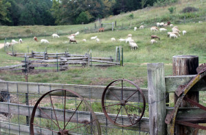 crystal-creek-ranch-self-guided-tours-9