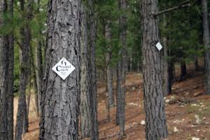 crystal-creek-ranch-spiritual-retreats-10