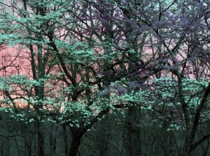crystal-creek-ranch-spiritual-retreats-4