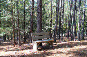crystal-creek-ranch-walking-trails-10