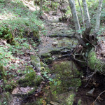 crystal-creek-ranch-walking-trails-8