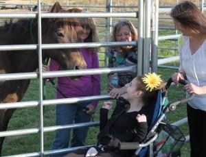 CCR spirit horse 8
